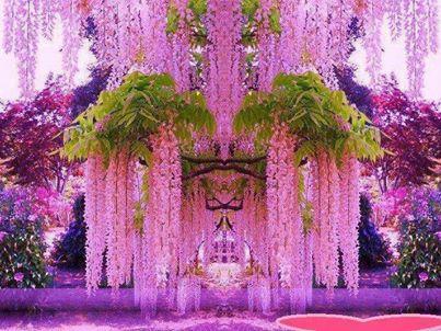 PurpleWisteria