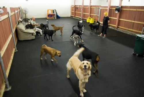 Grateful Dog Daycare