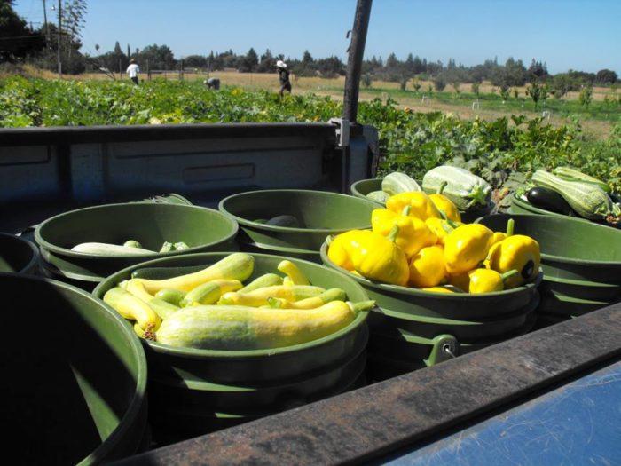 American river ranch farmstand sacramento for Soil born farms