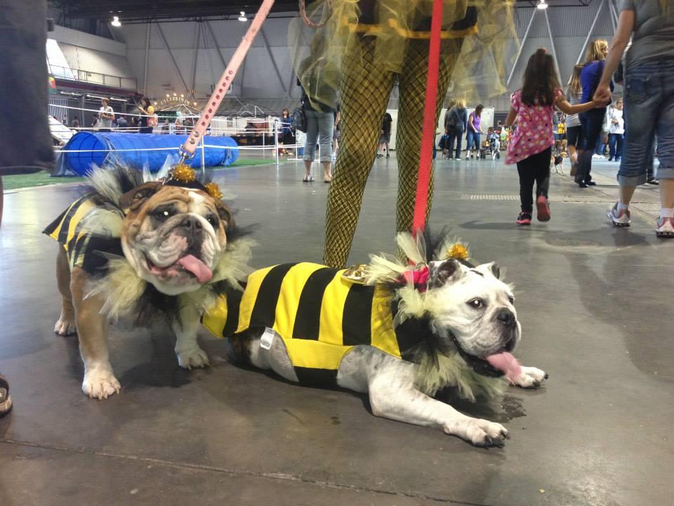 sac dog show bees
