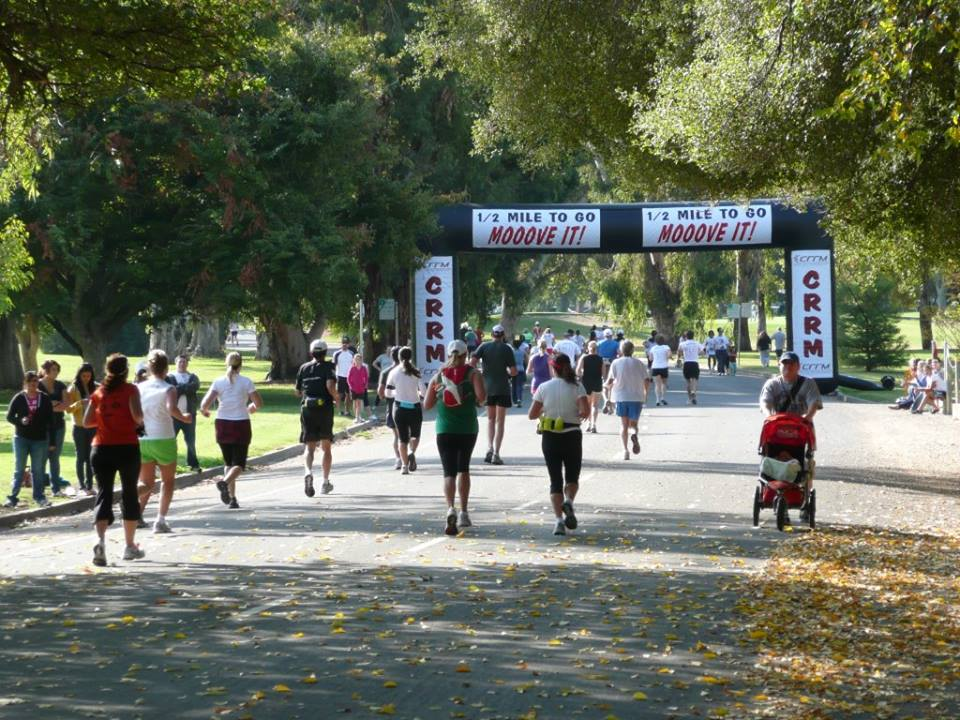 urban cow marathon run. 2jpg