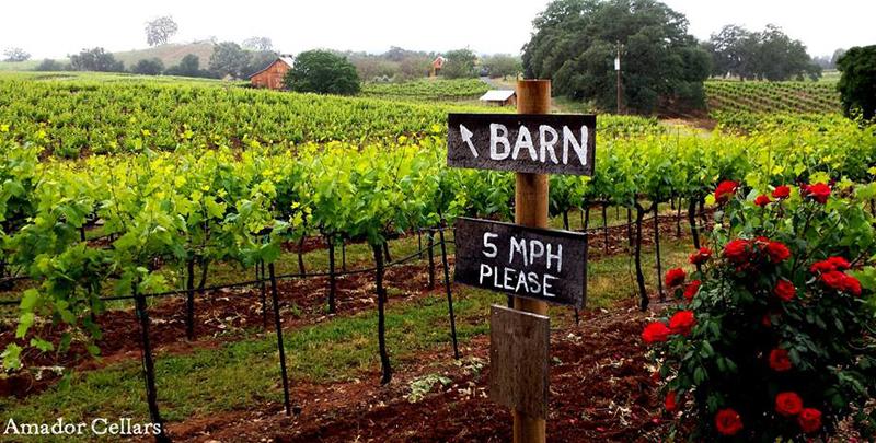 amador county wineries 1