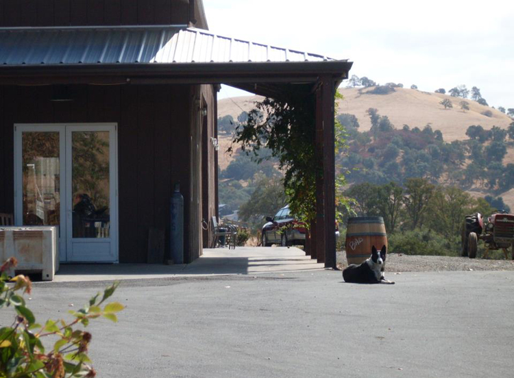 amador county wineries 10