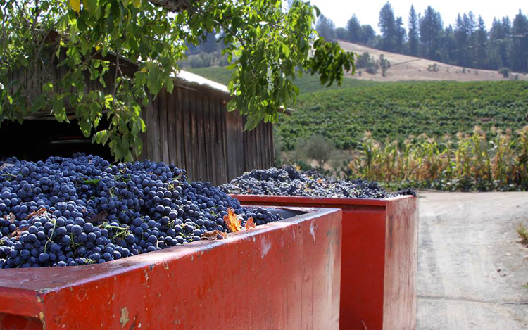 amador county wineries 4