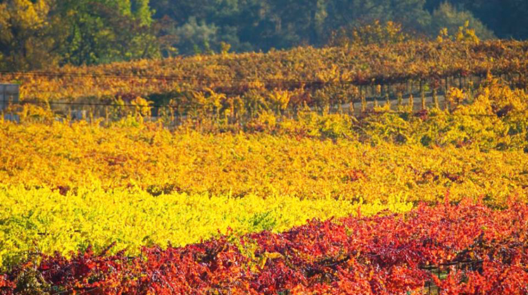 amador county wineries 8