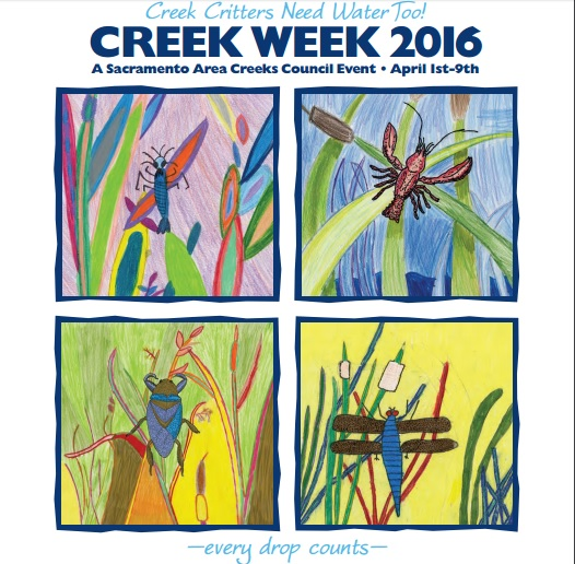 creek week 2016