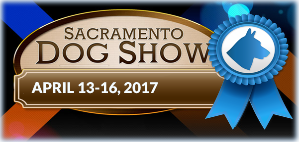 Best Dog Groomers In Sacramento