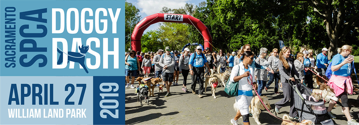 26th Annual Sacramento SPCA Doggy Dash